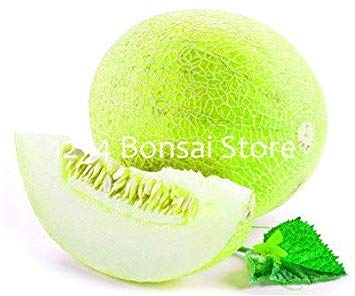 50 pcs Japon Fruits Cantaloup Bonsai Plantes Original Green Chair Fruit Arbre délicieux Muskmelon Plante Balcon Plante Jardin: 15