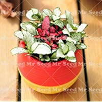 Pinkdose 100 unids Bonsai Chino Mezcla de Arco Iris Planta de Coleo Mini Plantas en Maceta para la plantación de huertos caseros: 16