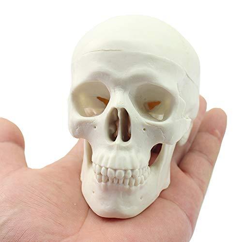 TMIL Miniatur Menschlicher Schädel Modell, Mini Desktop Schädel Hat Abnehmbare Schädelkappe Und Bewegliche Kiefer, Sammlungswert Kleine Replik Realistischer Menschlicher Schädel -