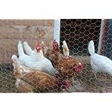 Chicken/Rabbit Wire Netting 900x50x50mt GALVANSIED Garden Fencing Mesh