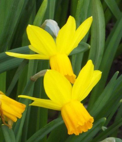 Das_Blumenliesel