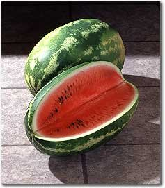 premier-seeds-direct-wml01-water-melon-cal-sweet-finest-seeds-pack-of-60