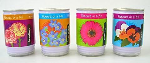 Blumen In Einer Dose (einzeln geliefert)