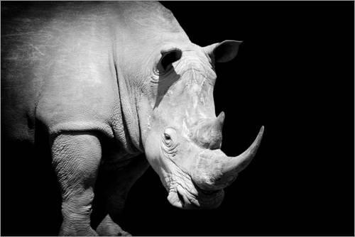 Posterlounge Leinwandbild 180 x 120 cm: Nashorn im Rampenlicht von Editors Choice - fertiges Wandbild, Bild auf Keilrahmen, Fertigbild auf echter Leinwand, Leinwanddruck