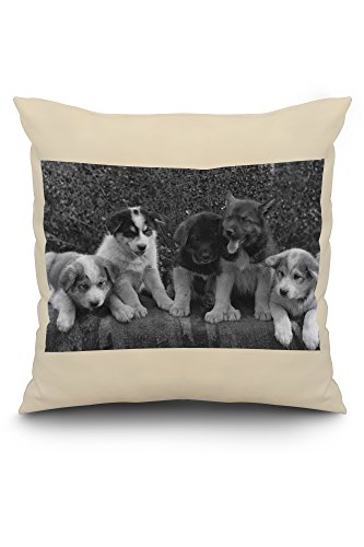 puppies-that-will-some-day-pull-dog-sleds-photograph-16x16-spun-polyester-pillow-case-white-border