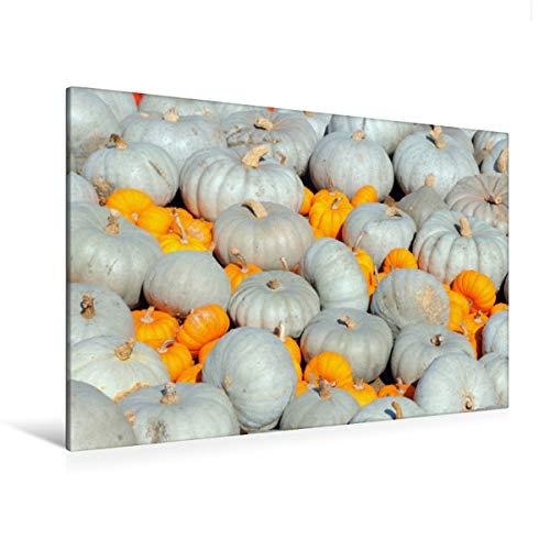 Premium Textil-Leinwand 120 x 80 cm Quer-Format Sweet Gray und Mandarin Speisekürbisse | Wandbild, HD-Bild auf Keilrahmen, Fertigbild auf hochwertigem Vlies, Leinwanddruck von Anja Frost