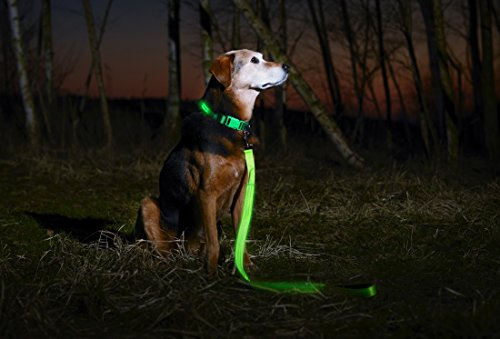 Illumiseen LED Dog Collar - USB Rechargeable - Your Dog Will Be More Visible & Safe - 6 Colours (Red, Blue, Green, Pink, Orange & Yellow) and 4 Sizes - Perfect To Use With Our Matching Lead 4