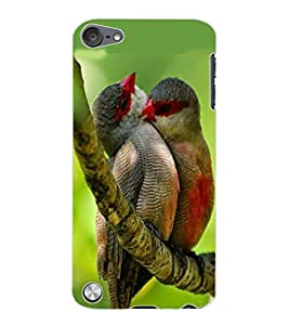 ColourCraft Love Birds Design Back Case Cover for APPLE IPOD TOUCH 5