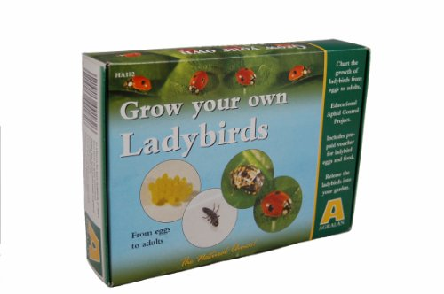 Agralan M182 Grow Your Own Ladybird Kit