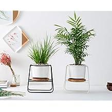 Suchergebnis Auf Amazon De Fur Fensterbank Deko Modern