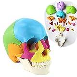 VIEUR Mensch Farbe Schädel-Modell Abnehmbare 22 Teile 1: 1 Lebensgröße Medizinisch Menschliche Anatomie Skelett Anatomisches Modell