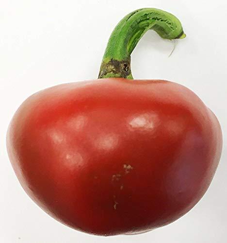 PLAT FIRM Germinación de Las Semillas: Paquete de la semilla de la Herencia Vasca Nora Pimienta Premium + Mã¡s