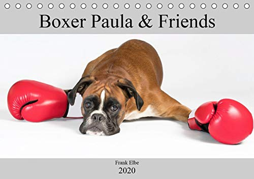 Boxerhündin Paula and Friends (Tischkalender 2020 DIN A5 quer)