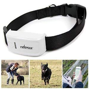 Electrolandia® Collar Localizador GPS para Perros
