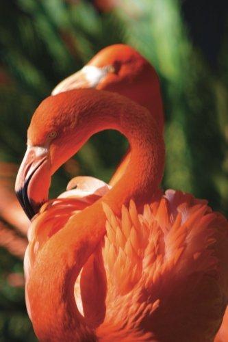 Flamingo Journal: Volume 12 (Wildlife 365 Lined)