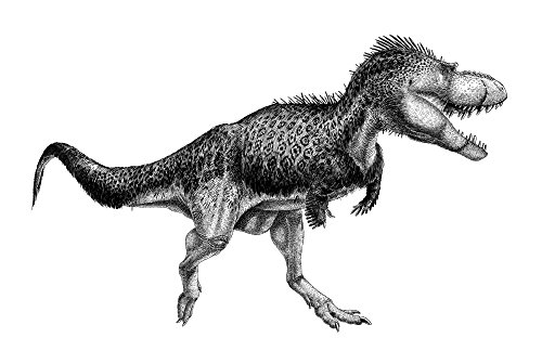 Vladimir Nikolov/Stocktrek Images – Black ink drawing of Albertosaurus sarcophagus. Photo Print (88,90 x 57,40 cm)