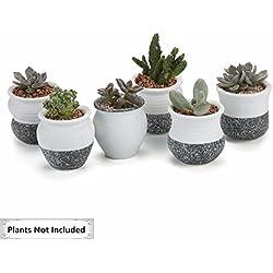 T4U Conjunto de 6 Mini Estilo De Corea Serie De Nieve Set Completo Cerámicos Planta Maceta Suculento Cactus Planta Maceta Planta Contenedor Vivero Maceta Blanco