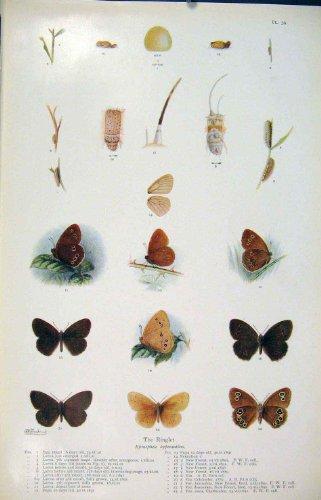 impresion-antigua-del-arte-de-la-larva-del-gusano-del-insecto-de-la-mariposa-del-rizo