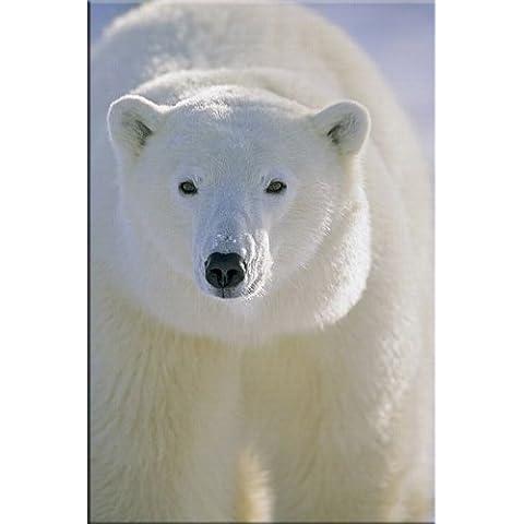Startonight nachtleuchtendes tela, Orso polare, 120 cm