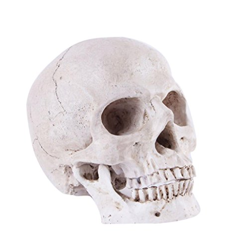 MagiDeal Menschliches Schädel Kopf Modell Figur Deko für Halloween Party Karneval - # 3 18X14X12