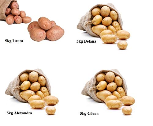 "FRUCHTVERSAND24® Kartoffel- Sortiment \""Probier-mal\"" (Speisekartoffeln) Belana, Alexandra, Laura, Cilena (4 x 5kg)"