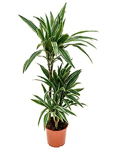 Zimmerpflanze Wenig Licht zimmerpflanze wenig licht test gartenbau für jederman ganz