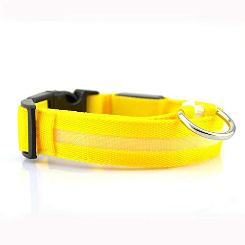 JUNSHUO Hundehalsband (LED wiederaufladbar) in vielen Farben & Größen für kleine & große Hunde Halsband Hund Katze Welpe Katzenhalsband klein   Hunde-Halsbänder breit Leuchtend verstellbar (M, GELB) -