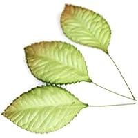 100 verde rosa de papel Mulberry hoja follaje w 3,5 cm de la boda.