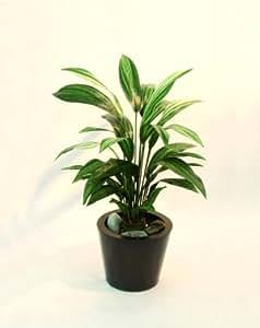 Dracena, verde, 70 cm