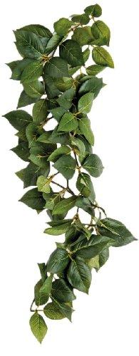 Komodo Pflanze Sumatra Silk Vine