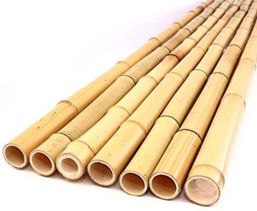 bambus-discount.com 12679 VX12679