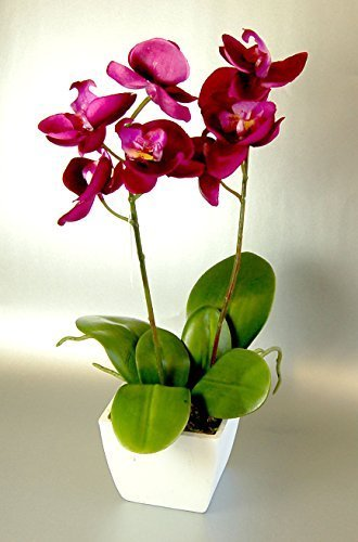Artificial Silk Fuchsia Pink Mini Orchid in a Pot by CB Imports