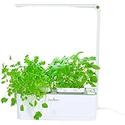 Odyseed Eden - Hausgarten 100% Biologisch - Wachsen Sie Ihre Eigenen Aromatischen Kräuter Zuhause - Keine Kapseln - Substrat & Samen bereits enthalten (Zitronen-Basilikum & Zimt-Basilikum)