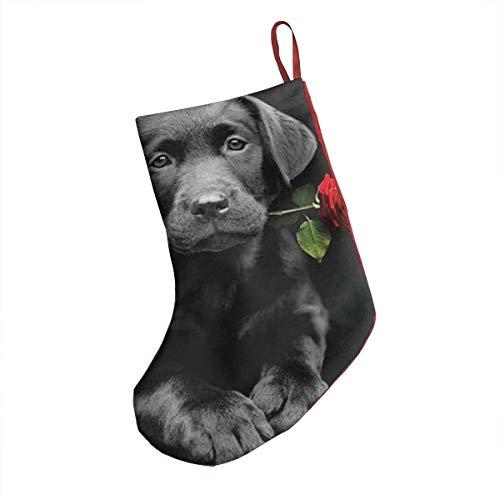 NR Labrador Retriever schwarzer Hund Rose unter dem Motto Weihnachtsstrümpfe Dekoration Weihnachten Socken Ornament 18 Zoll XL große Bulk Big Jumbo Riesen Indoor Home Party Supplies Artikel Zubehör -