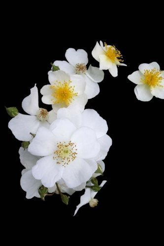 Georgia State Flower - Cherokee Rose Journal: 150 page lined notebook/diary by Cool Image (2016-05-16) (Rose Cherokee)