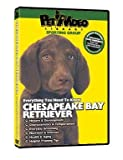 CHESAPEAKE BAY RETRIEVER DVD! + Dog & Puppy Training Bonus