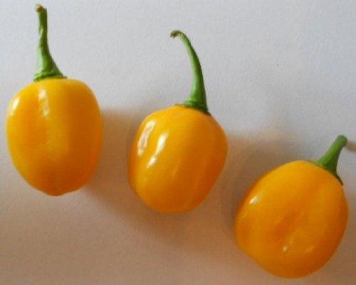 "HABANERO ORANGE ""APPLE Chili"" 10 SAMEN (Super Ertrag)"