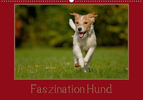 Faszination Hund (Wandkalender 2020 DIN A2 quer): Der treuste Begleiter des Menschen von seiner schönsten Seite. (Monatskalender, 14 Seiten ) (CALVENDO Tiere) -