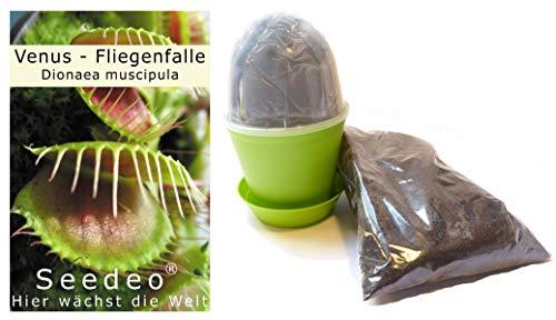Seedeo Anzuchtset Venus Fliegenfalle (Dionaea muscipula)