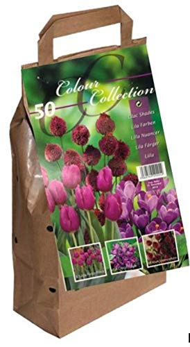 Greenbrokers Limited Colour Collection Blumenzwiebeln, Frühlingsblumen, Violett, 50 Stück