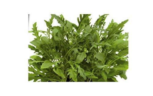 8000x Rucola, Wild, Sylvetta - Rucola Samen Gemüse Kräuter Pflanze K86 (Samen Wild-kräuter)