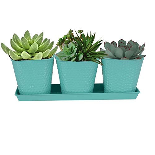 CINAGRO - Pack of 3 Designed Desk Planter with Tray Light Green Color