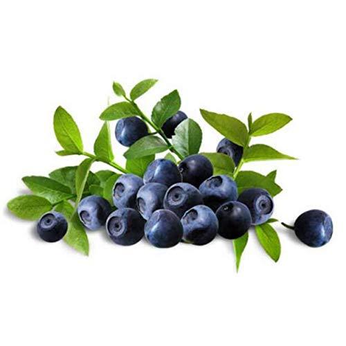 100 pezzi piante di mirtillo bonsai frutta purify airtree alta raccolto mirtilli bonsai per la casa e il giardino facile da coltivare