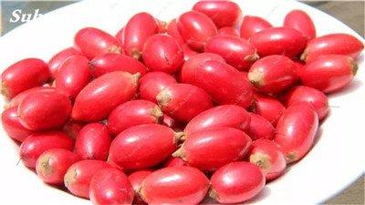 Chine bon marché 5 Pcs Miracle Fruit Graines Cashew Arbre Anacardium Tropical New Pot Occidentale Plantation Gardens Livraison gratuite 7