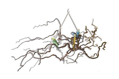 Große Korkenzieherhasel Sitzstange zum Aufhängen mit toll verschnörkelten Zweigen | Der wohl Beste Vogelspielplatz BZW. Spielzeug für Wellensittich, Nymphensittich, Kanarienvogel | Riesen Schaukel