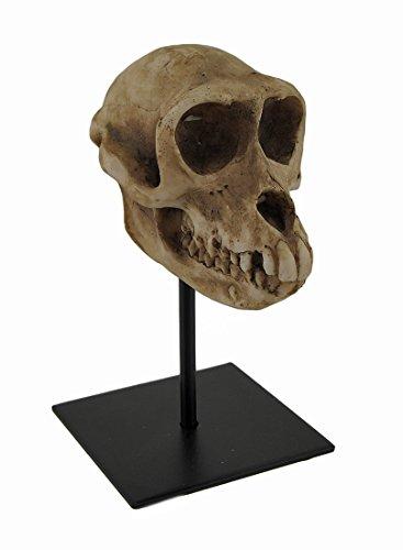 Monkey Totenkopf Statue auf Museum - Auf Hände Wissenschaft Halloween