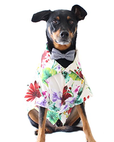 Dog ThreadsTM Hund Fäden tuity Fruity BBQ Shirt Colorful Hawaiian Floral Print Button-Down Hemd für Hunde, Weiß, M (20-28lbs), Green, Yellow, Pink, Purple, Teal, Red, White