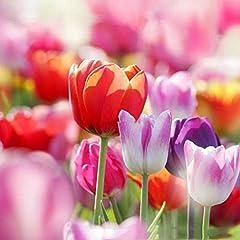 Idea Regalo - Kisshes Giardino - 100 Pezzi Bulbi di tulipano Semi di fiori Bulb Semi di fiori colorati Tulipani Bonsai Hardy Perenne