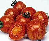 Bobby-Seeds Tomaten Red Zebra