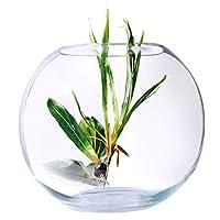 Mumoo Bear Fish Bowl Glass Large Size - 50D